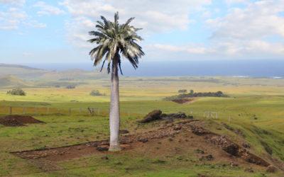 Árboles Sagrados de la Polinesia