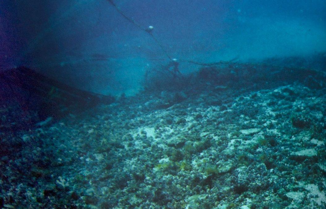Sobrepesca en Rapa Nui
