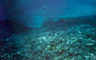Overfishing on Rapa Nui