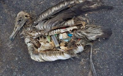 Plastic contaminates the coast of Rapa Nui