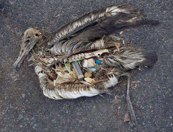 Plásticos Contaminan las costas de Rapa Nui